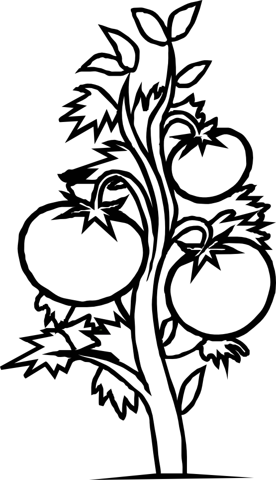 Quetzal Clip Art | Tattoo Design Bild
