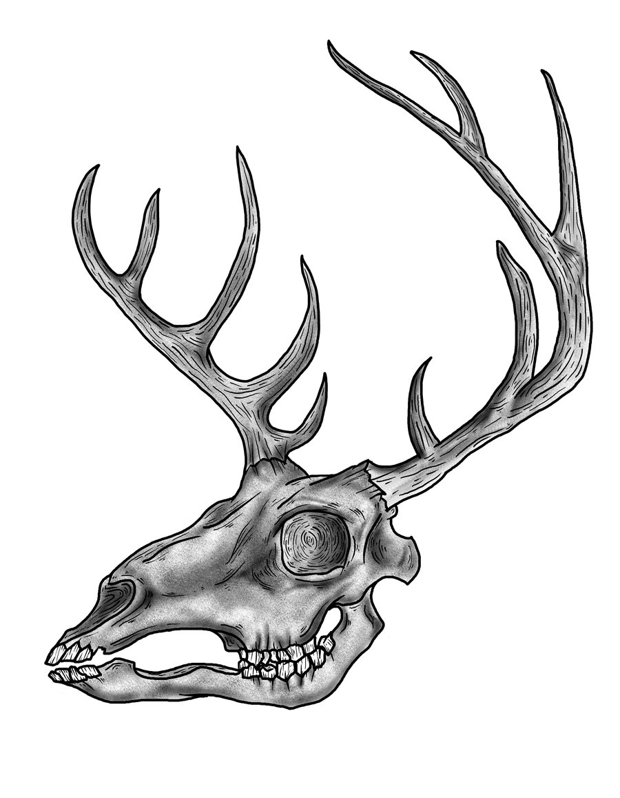 Elk skull drawing - photo#14