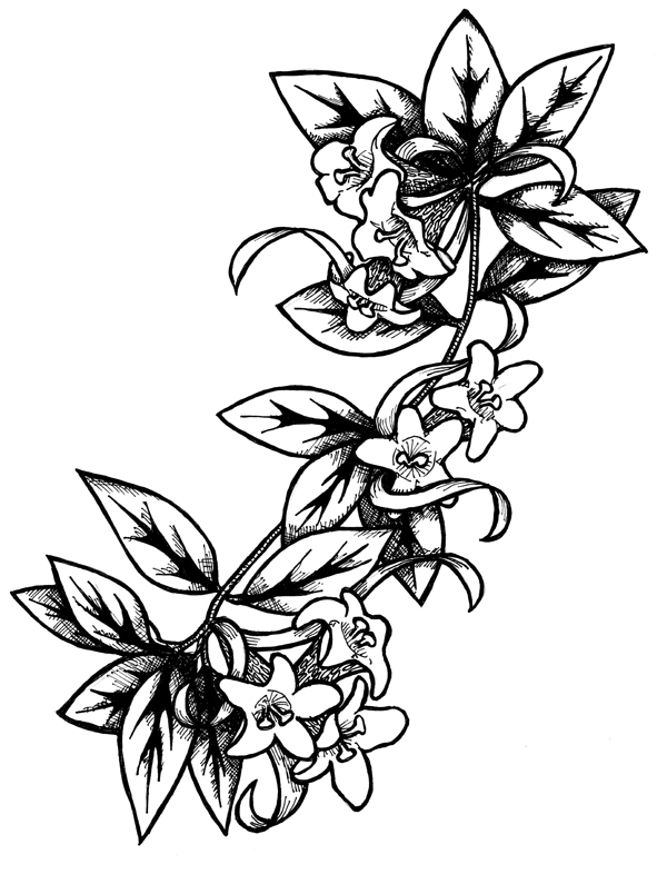 drawing Archives - livehigh  Drawing Flower Designs