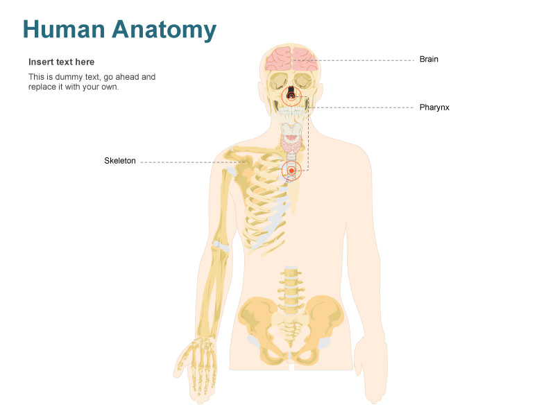 Human Body Illustration - Cliparts.co