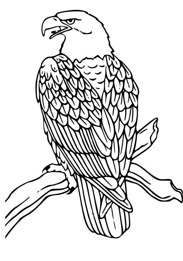 Cartoon Eagle Flying - Cliparts.co - photo#27
