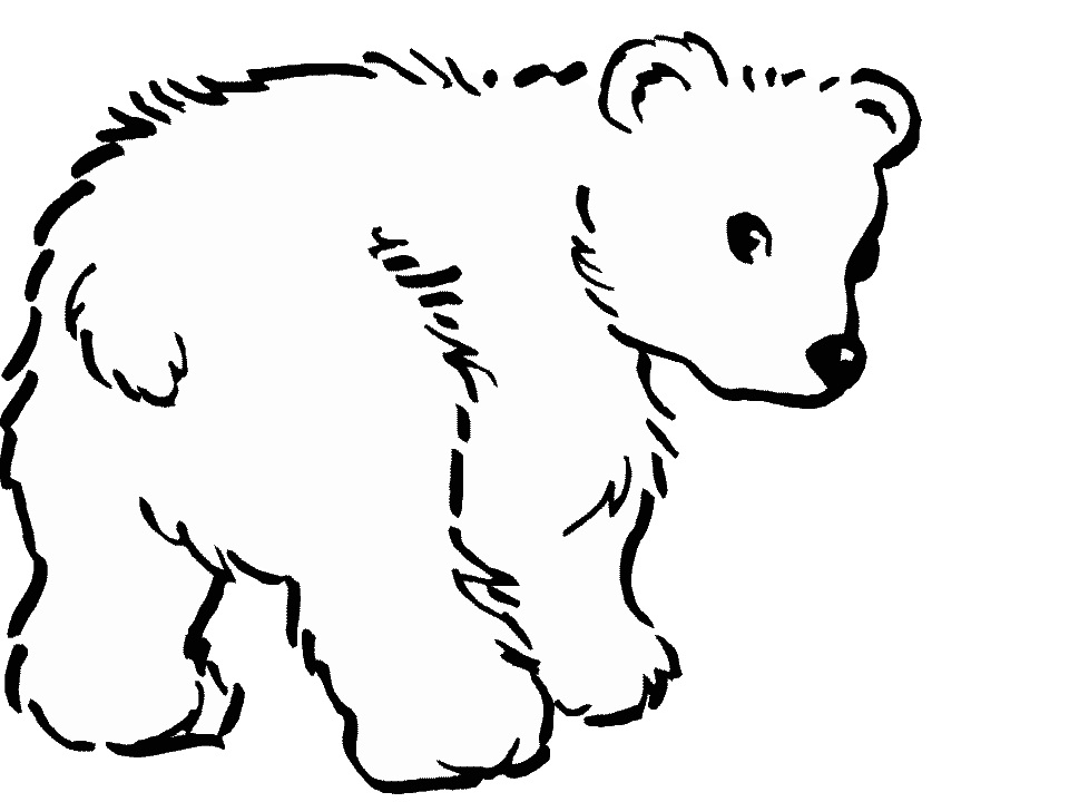 How To Draw A Baby Polar Bear Images Amp Pictures