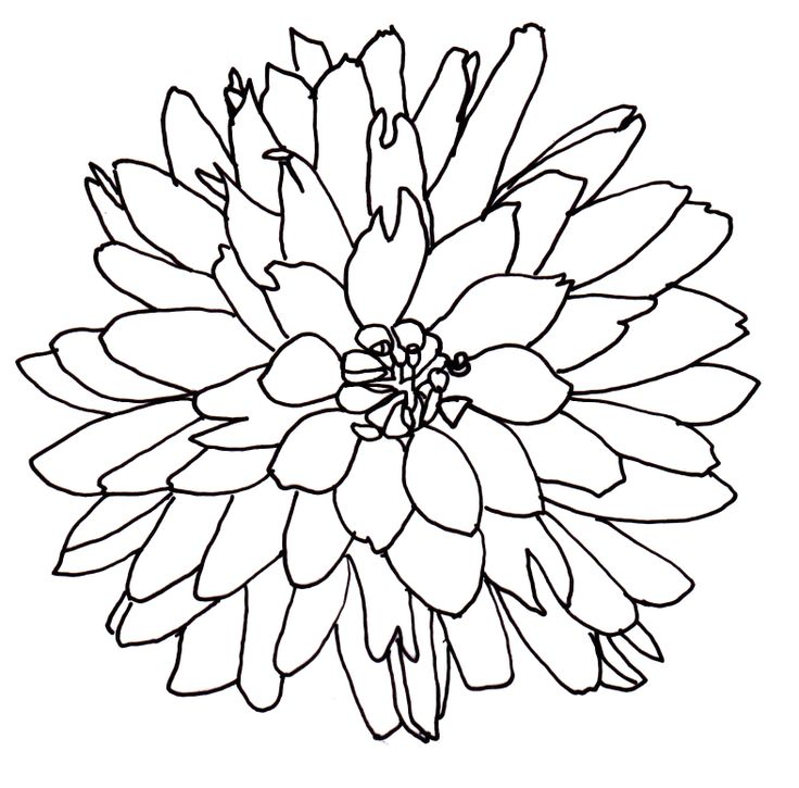 Line Drawing Flowers Blossom : Flower line drawing cliparts