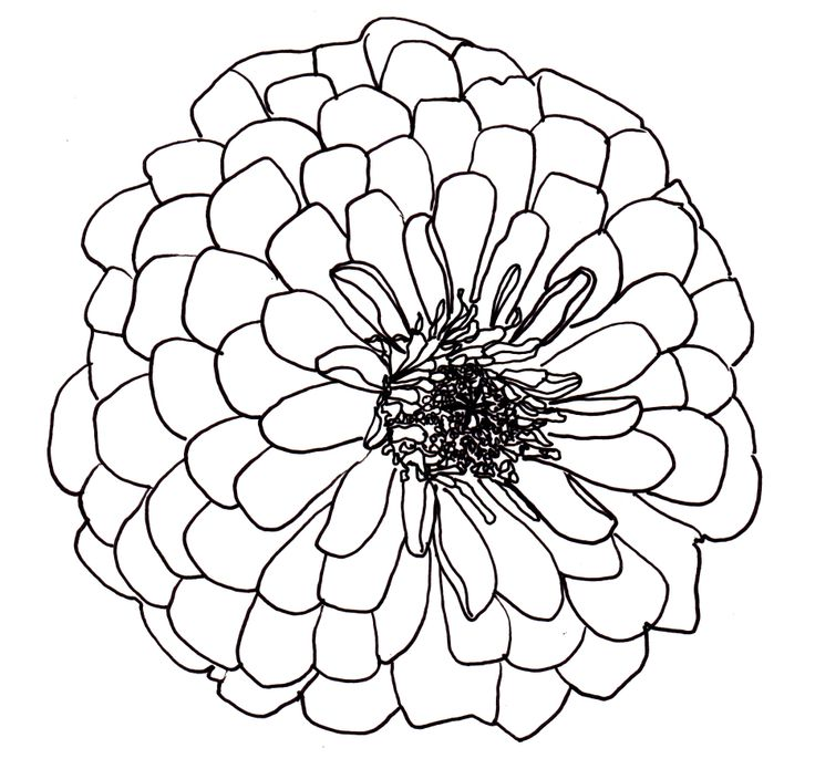 Line Drawing Flowers Blossom : Line drawing flowers dahlia drawings pinterest