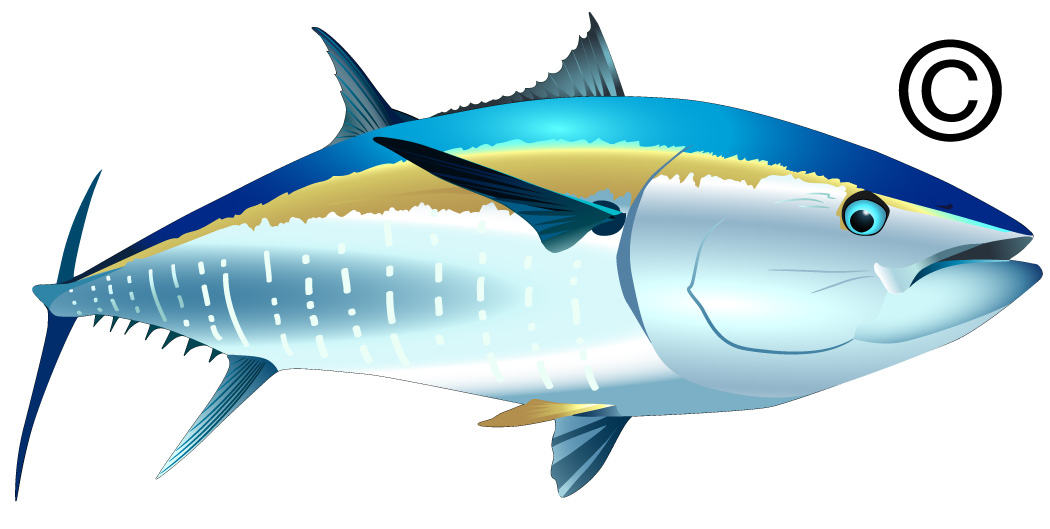fish clipart drawing - photo #48