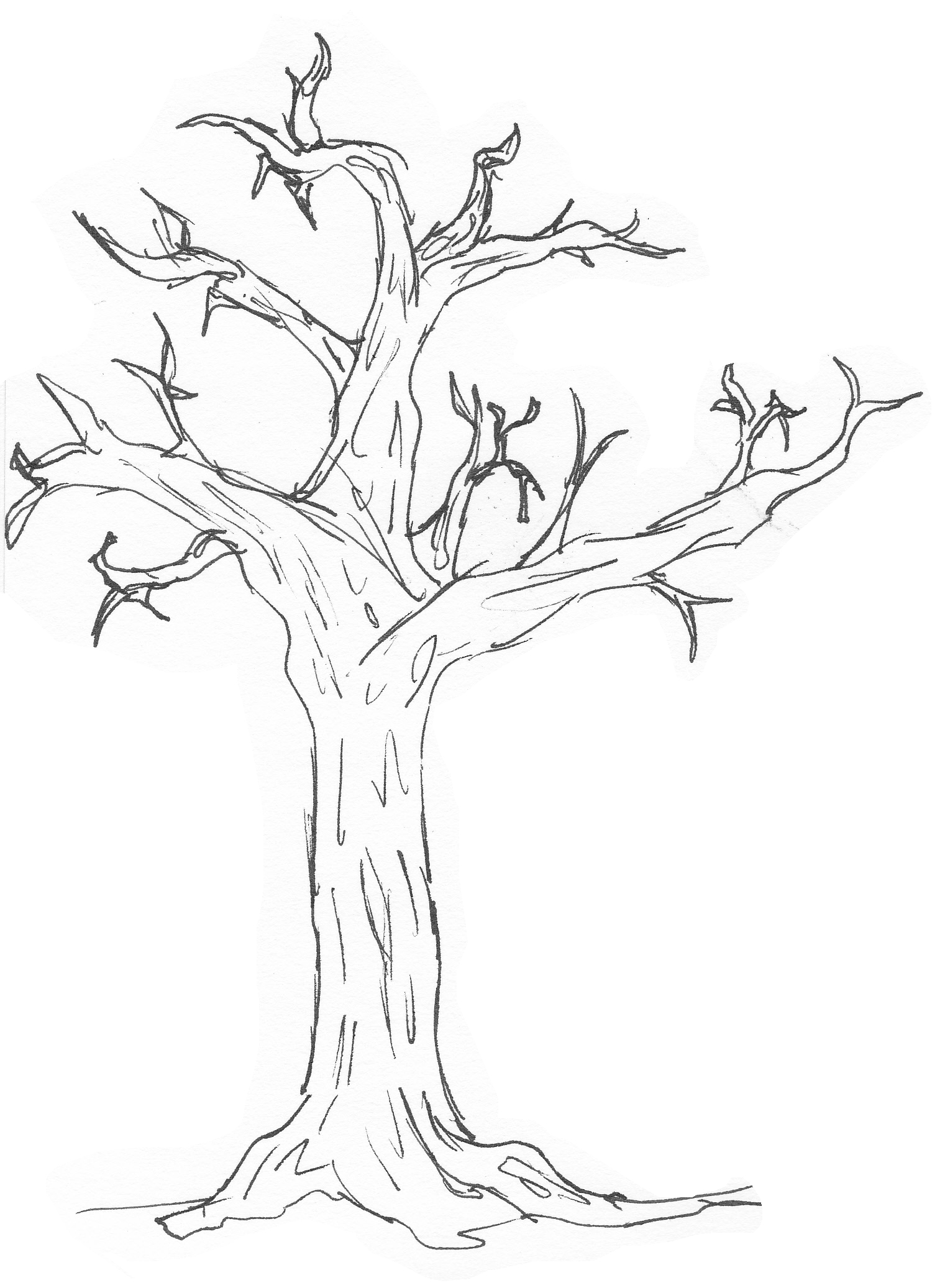 simple tree image clipartsco