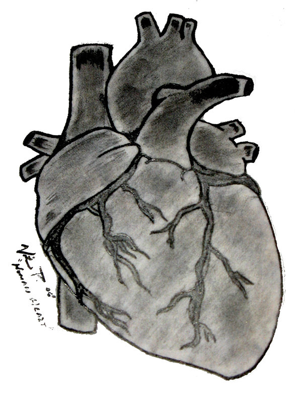 Real Heart Drawing Real Heart Sketch - Cl...