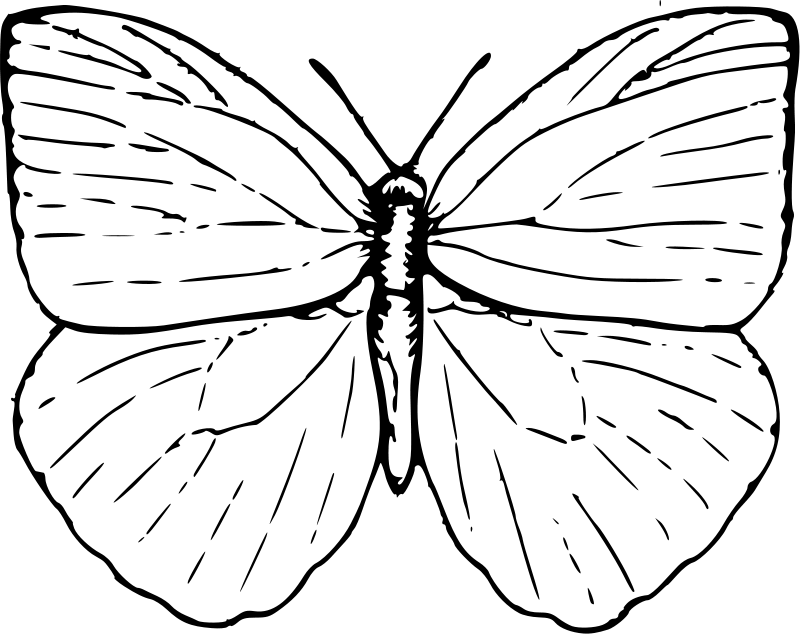 Butterfly Coloring Page - Preschool and Kindergarten | Butterfly ... | 634x800