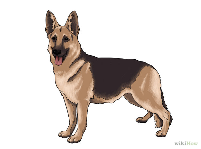 Pictures Of Dogs That You Can Draw