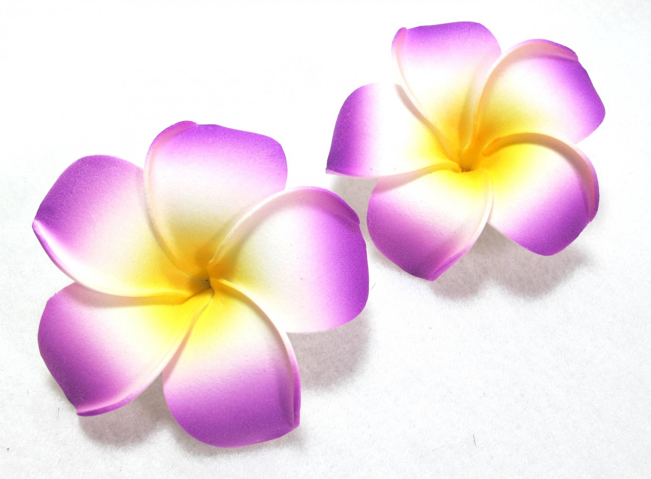 Plumeria Clipart - Cliparts.co