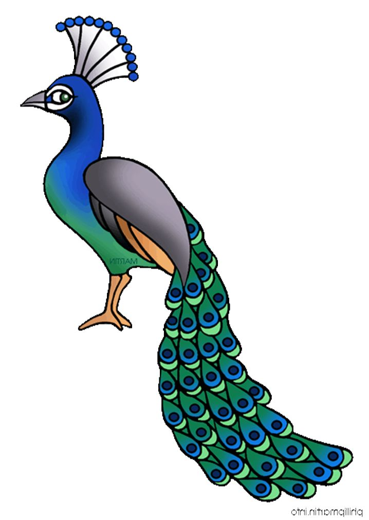 clipart pictures peacock - photo #10
