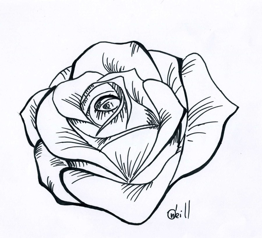 Rose Drawings Pencil Drawing Of A