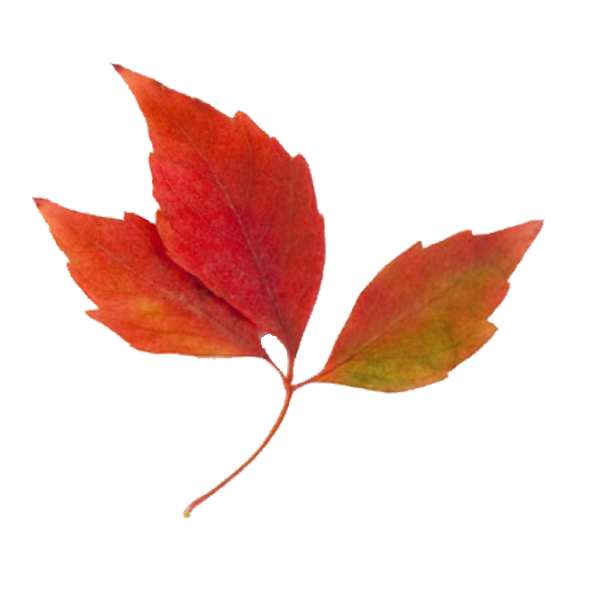 Fall Leaves Border Clip Art - ClipArt Best