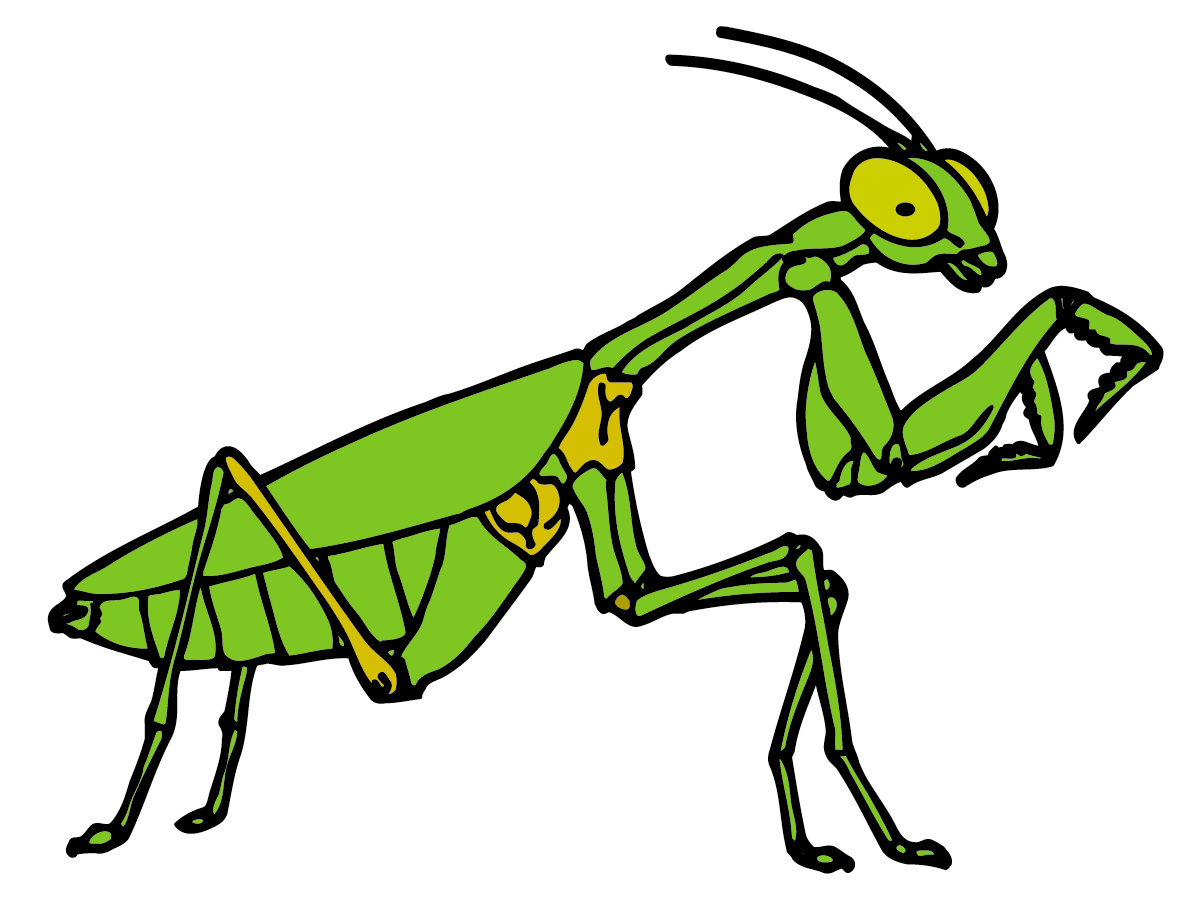 Insects Clipart - Cliparts.co