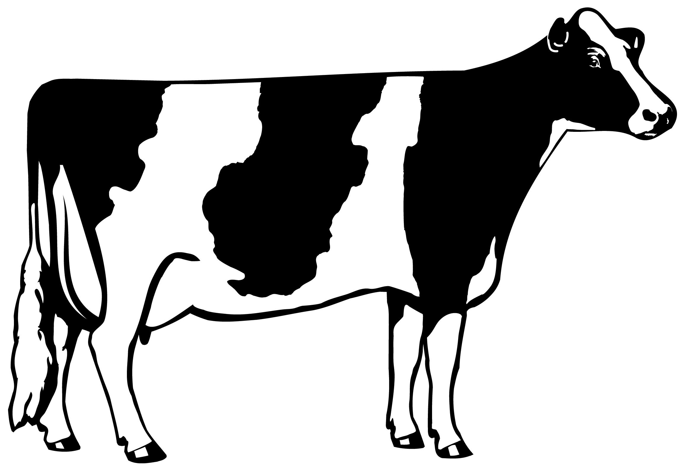 Dairy Cow Clipart - Cliparts.co