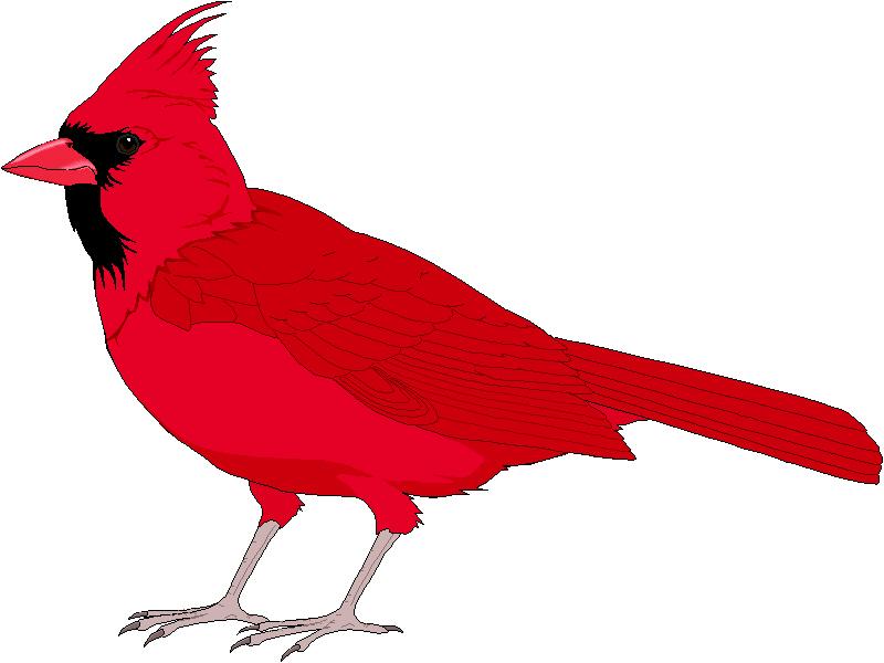 Clip Art Cardinal Clip Art st louis cardinals logo clip art cliparts co cardinal 20clip 20art