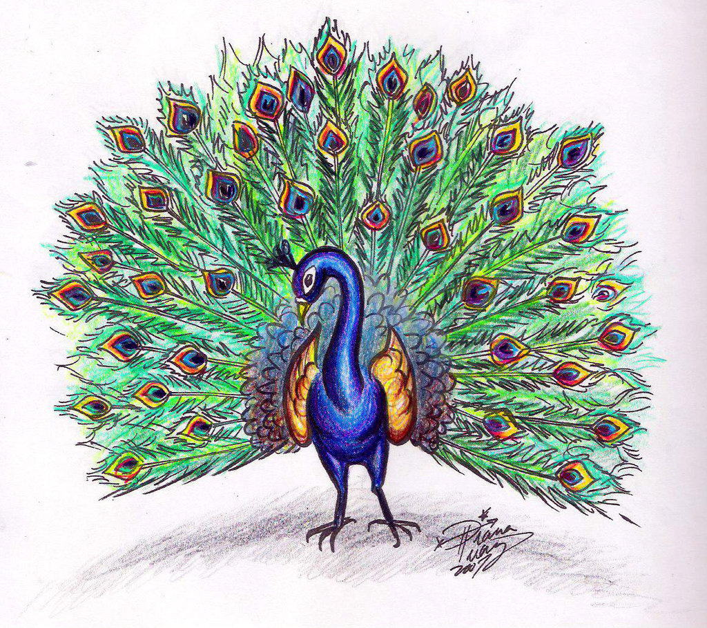 Simple Colorful Peacock Drawing Cliparts Co