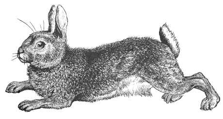 Rabbits Clipart - Cliparts.co