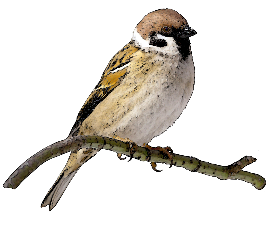 Sparrow Clipart - Cliparts.co: cliparts.co/sparrow-clipart