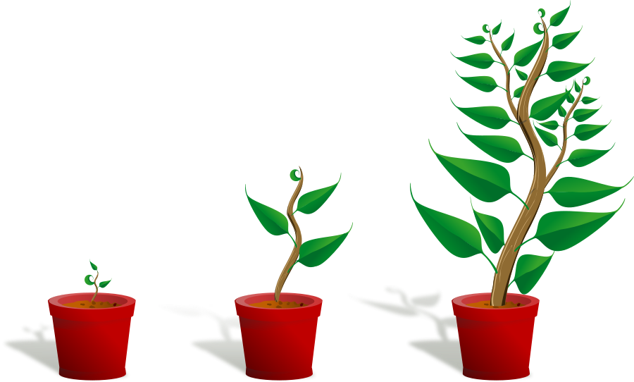 Potted Tree Clipart