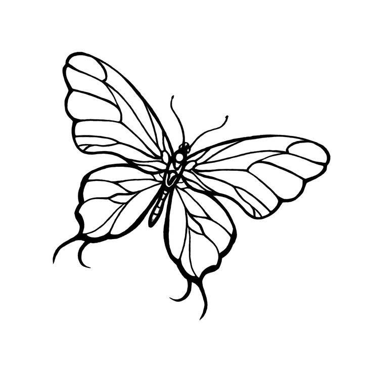Line Drawing Of Butterfly : Dragonfly line drawing pinterest