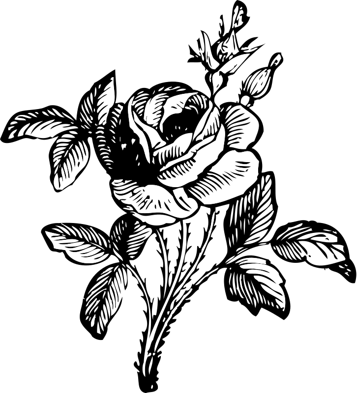 Line Art Rose Flower | Free Cliparts