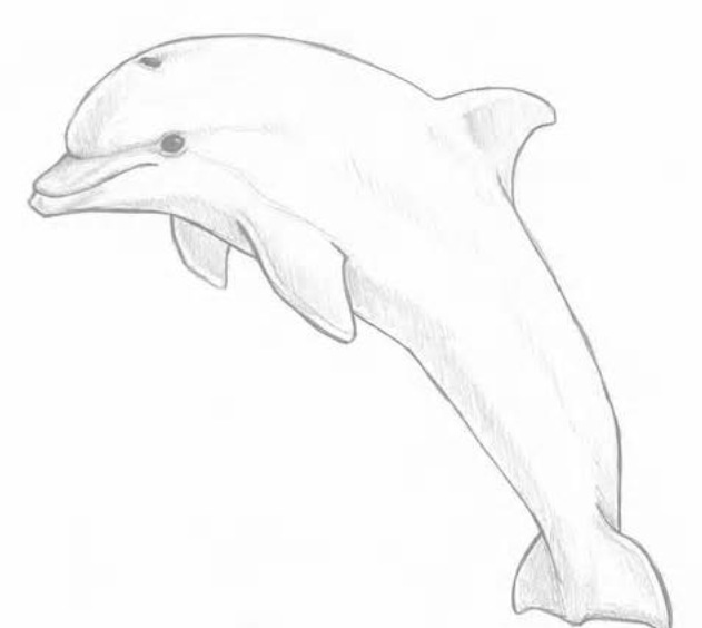 How To Draw A Bottlenose Dolphin: 5 Steps (with Pictures ...