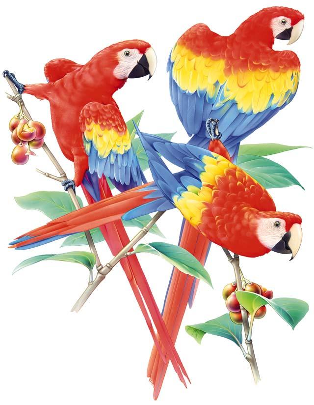 Clip art parrot for Art et fenetre nice