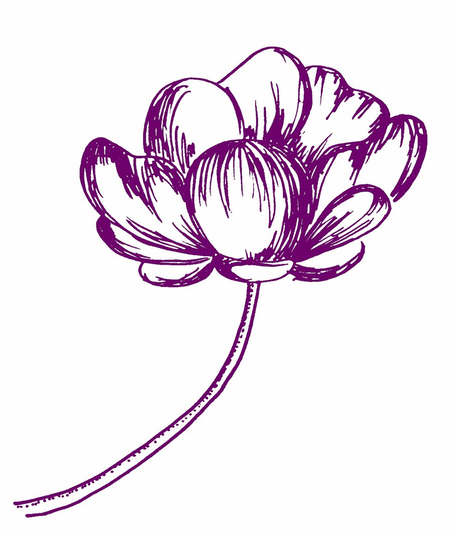 Drawing Scribble Flower : Eleletsitz transparent flower drawing tumblr images