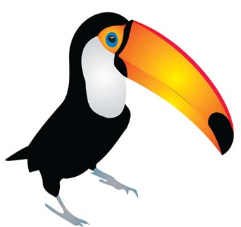 Cartoon Toucan Pictures - Cliparts.co - 29.1KB