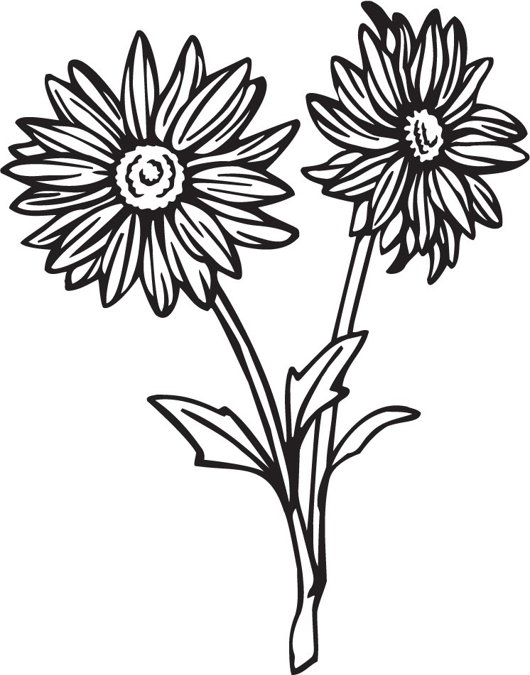 Gerbera Daisy Line Drawing Pix For  Daisy Line Drawing