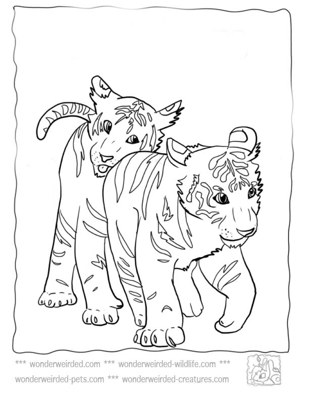 baby bobcat coloring pages - photo #3