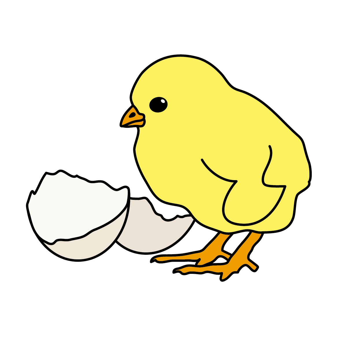 Images For > Free Chick Clipart
