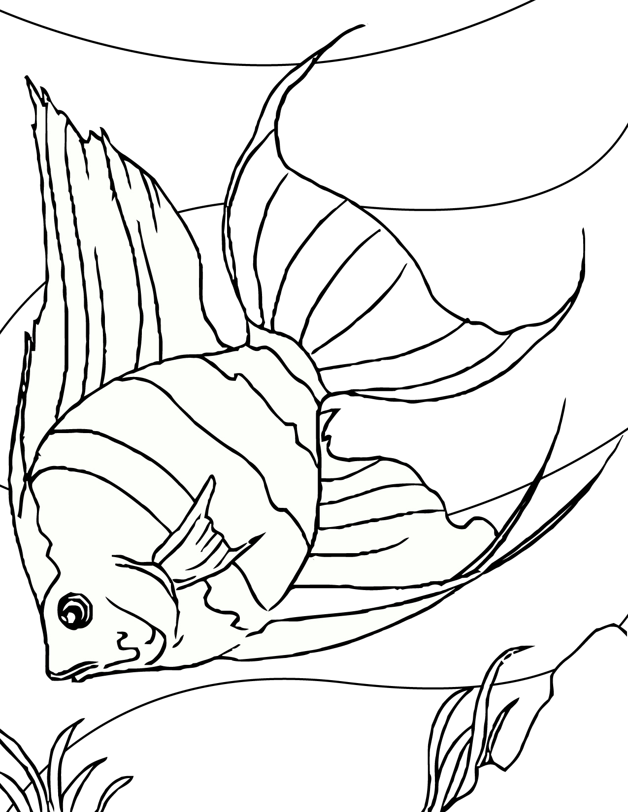Line Drawing Of Fish : Fish drawings images cliparts