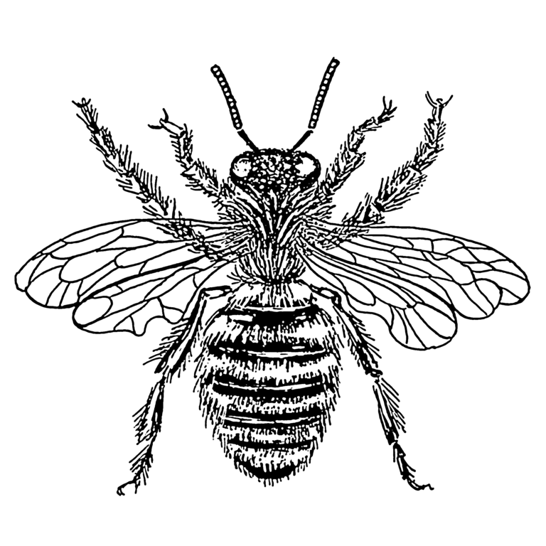 File:Bee - queen (PSF).png - Wikimedia Commons