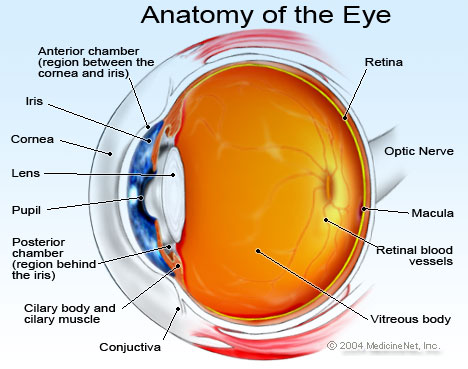 Eye Diagram Cliparts