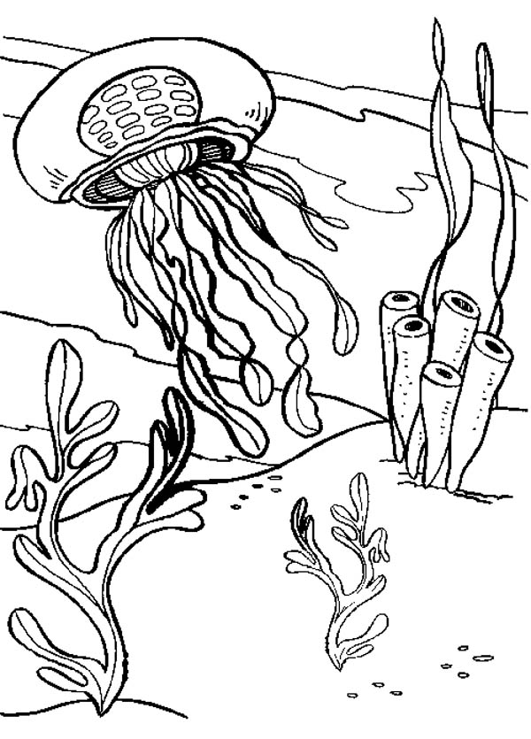 bmarine seaweed Colouring Pages (page 3)