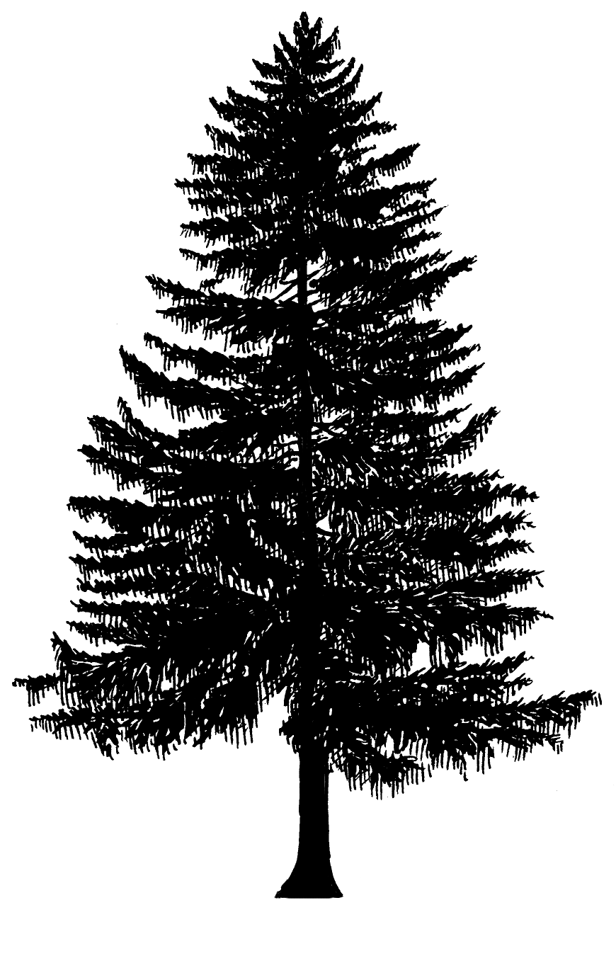 Evergreen Tree Outline - Cliparts.co