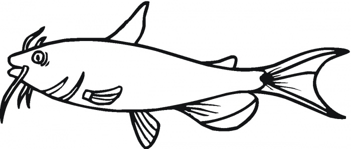 Catfish Drawings - ClipArt Best
