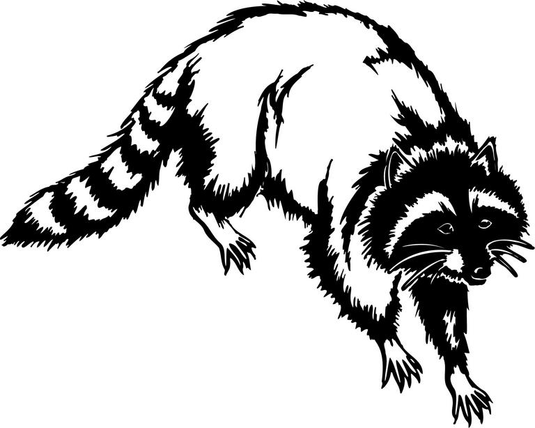 Racoon Clipart - ClipArt Best - Cliparts.co Raccoon Face Clip Art Black And White