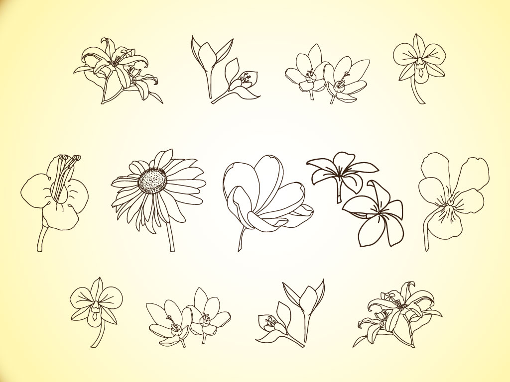 Drawing Vector Lines : Flower line drawing cliparts