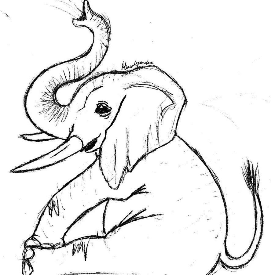 Line Drawing Elephant : Elephant drawings images cliparts