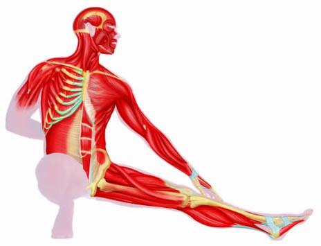 Human Body Clip Art - Cliparts.co