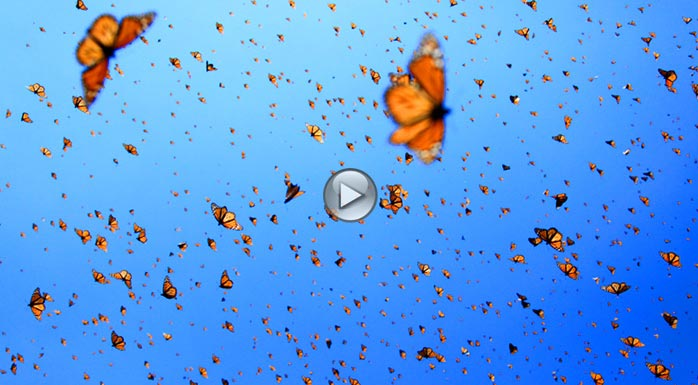 Images of flying butterflies