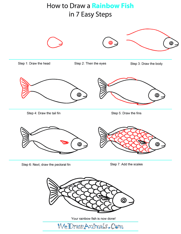 How To Draw a Fish  StepbyStep