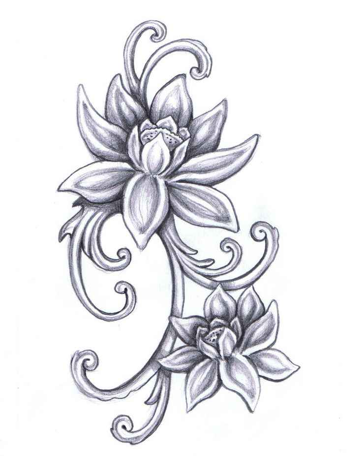 Lotus Flower Drawings On Pinterest Lotus Drawing Tattoo