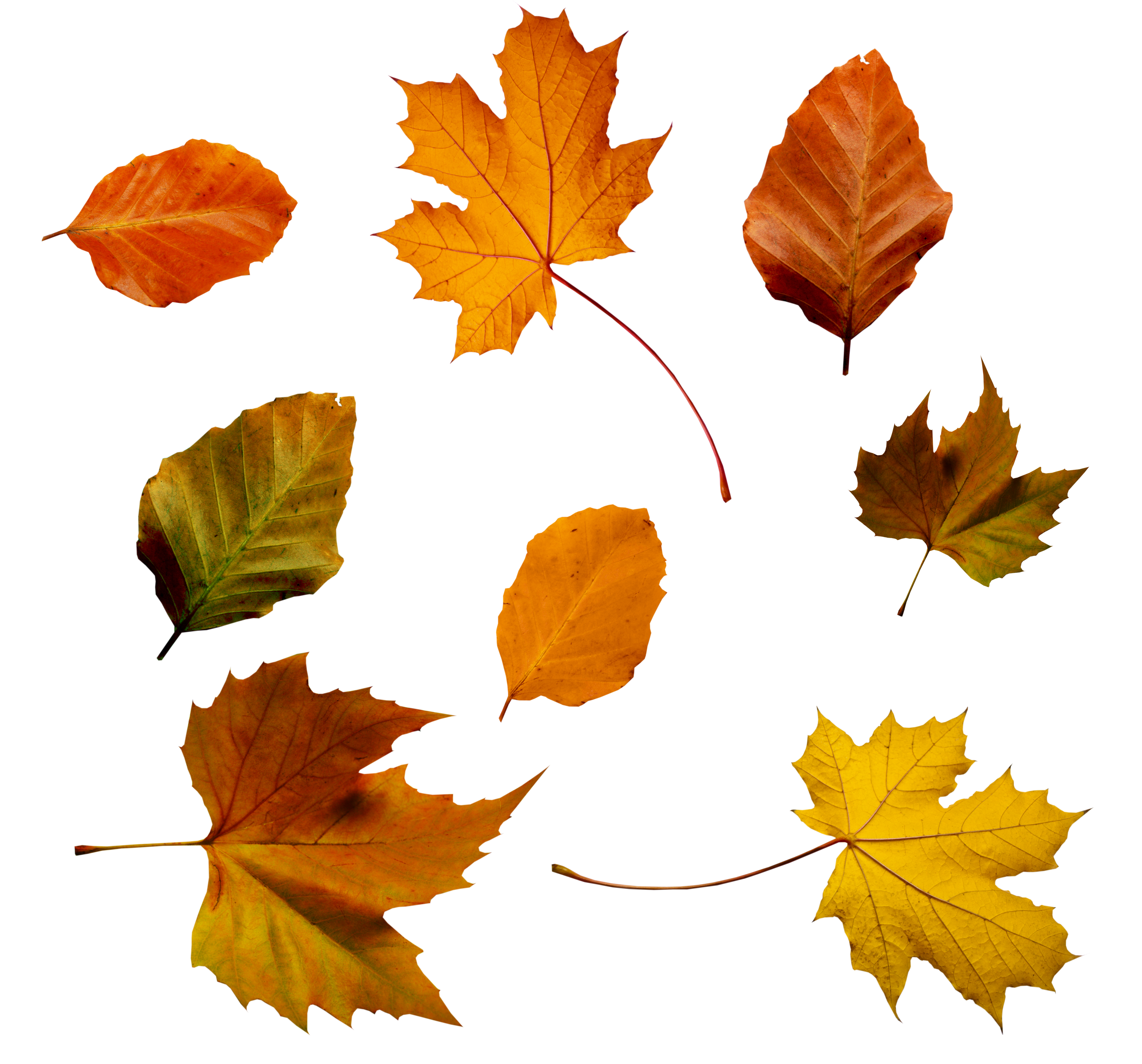 Photosynthesis - why do leaves change colors in the fall?