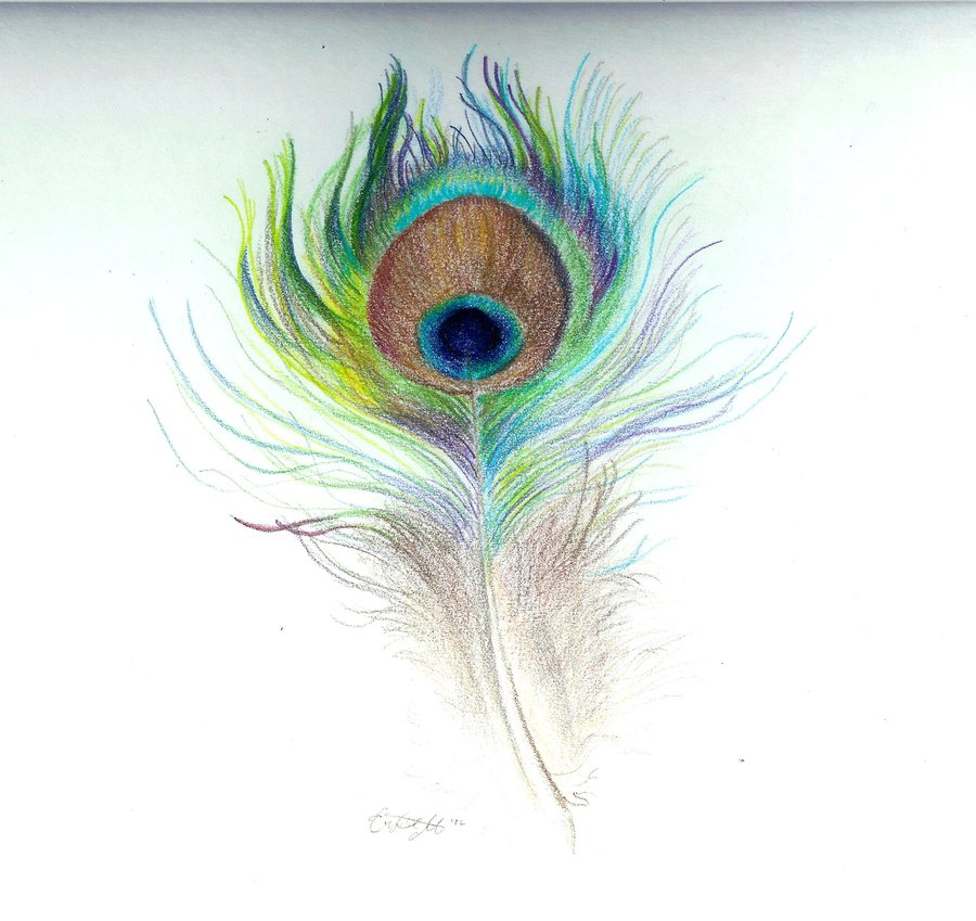 Simple colorful peacock drawing - photo#5