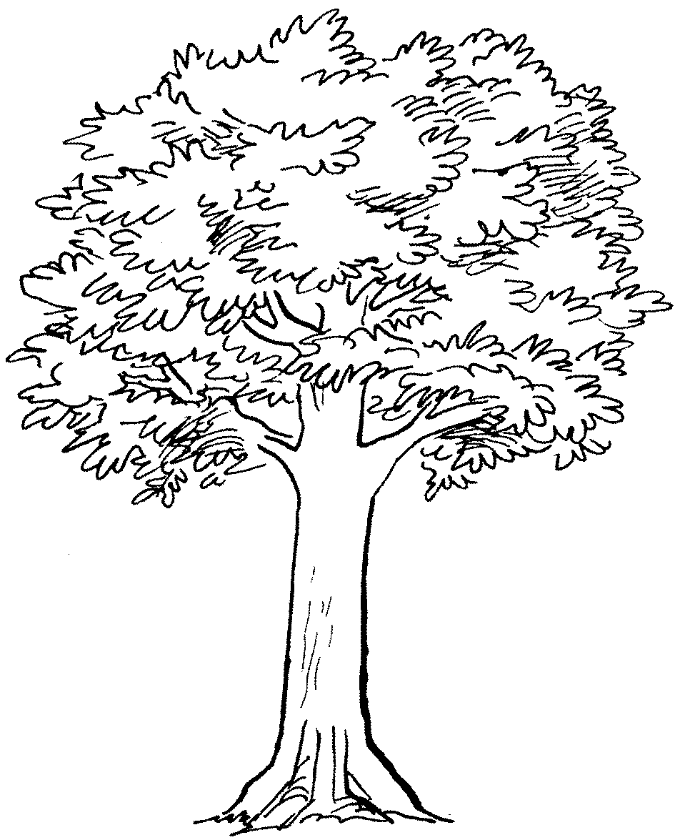 Tree With Roots And Branches Drawing Gallery Cliparts Co