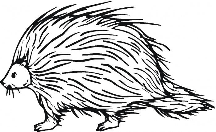 Porcupine Coloring Pages Cliparts Co Porcupine Coloring Pages